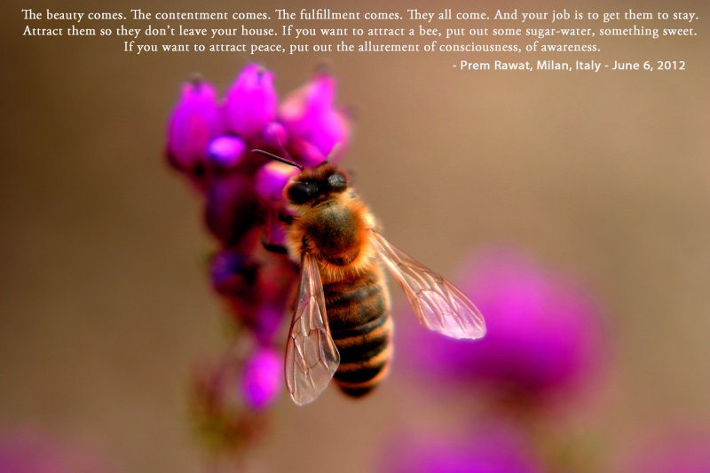 honey bee, pollination,Prem Rawat,quote