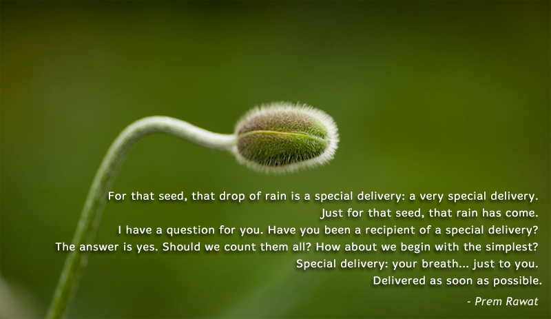 flower,bud,macro,Prem Rawat,quote
