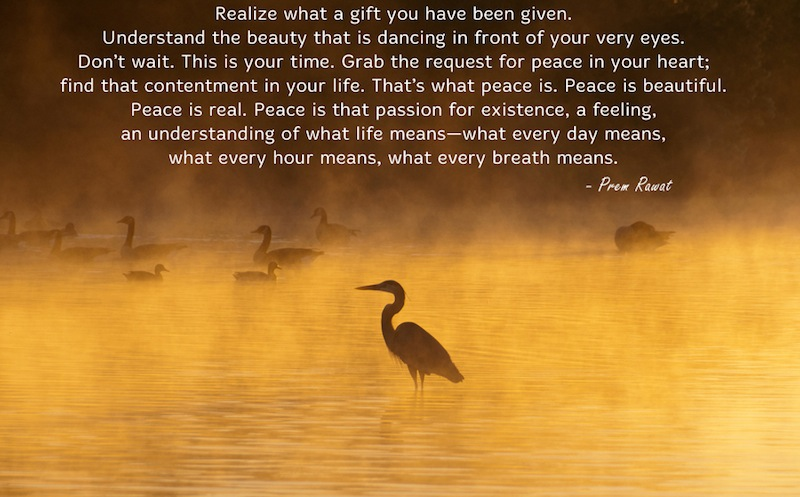 bird,hunting,Prem Rawat,quote