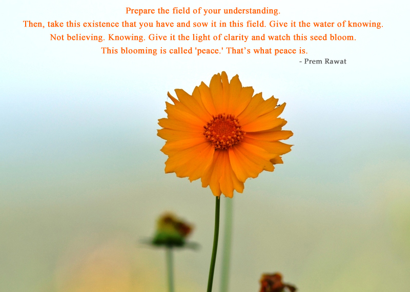 yellow flower,Prem Rawat,quote