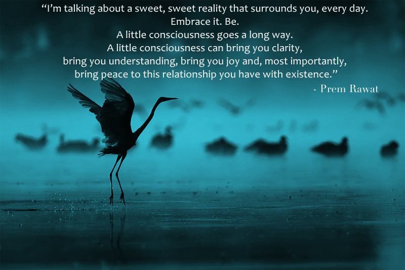 bird,flying, dancing,Prem Rawat at Sydney, Australia,quote