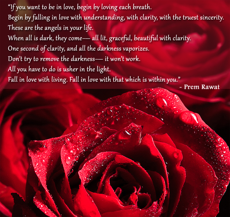 flower,red,rose,Prem Rawat,quote