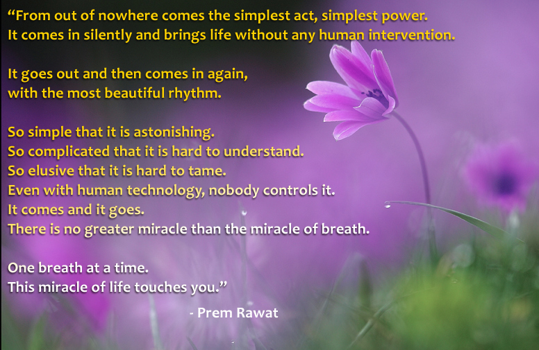 pink flower,Prem Rawat,quote