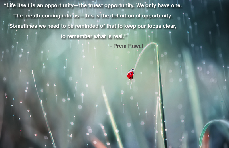 red,lady bug,Prem Rawat,quote