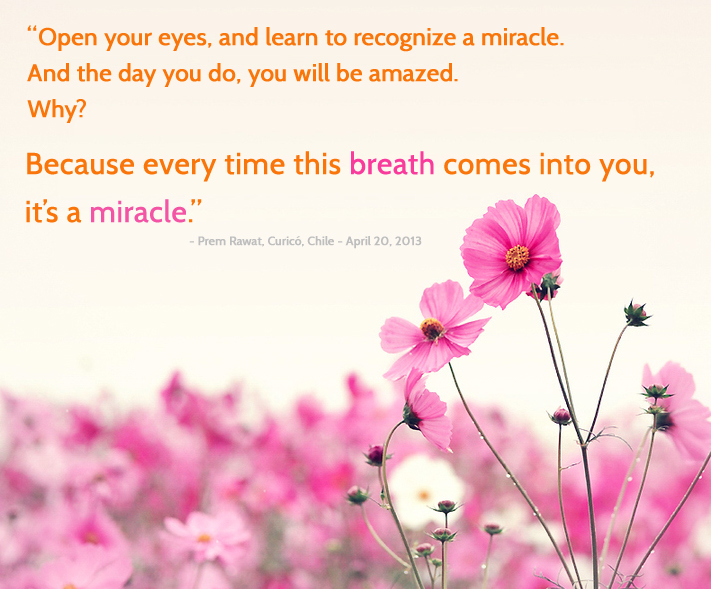 pink flower,Prem Rawat, Curicó, Chile - April 20, 2013,quote
