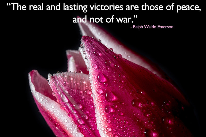tulip,red,flower,Ralph Waldo Emerson,quote