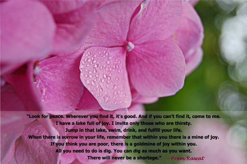 pink flower,Prem Rawat,quote