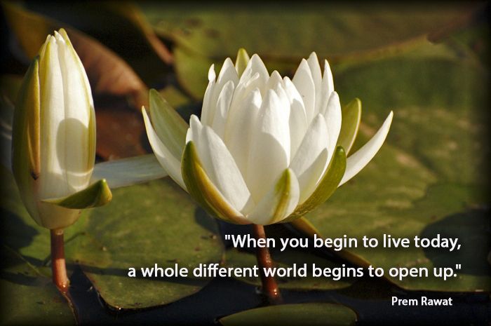 lotus,kamal,lake,Prem Rawat,quote
