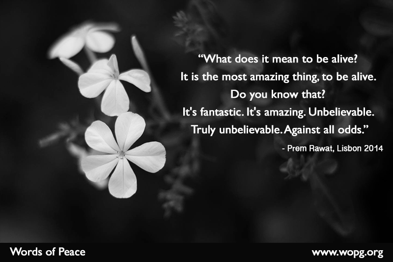 black & white, flower,Prem Rawat, Lisbon - 2014,quote