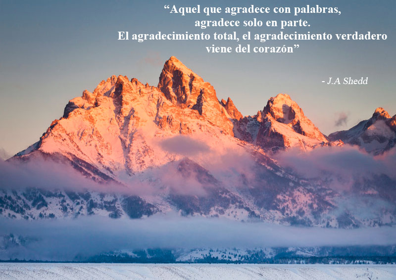 J.A Shedd,quote