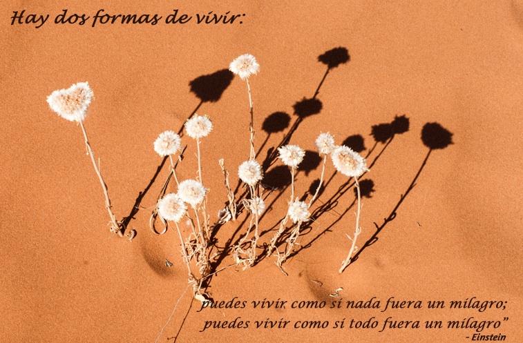 flower in desert,Einstein,quote