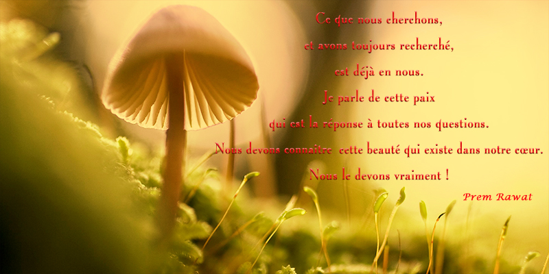 mushroom,Prem Rawat,quote