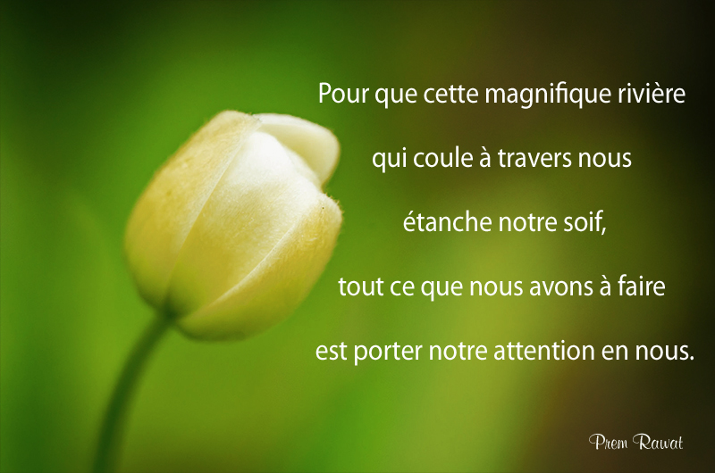 flower,Prem Rawat,quote