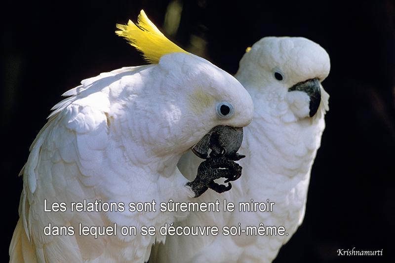 parrots,Krishnamurti,quote