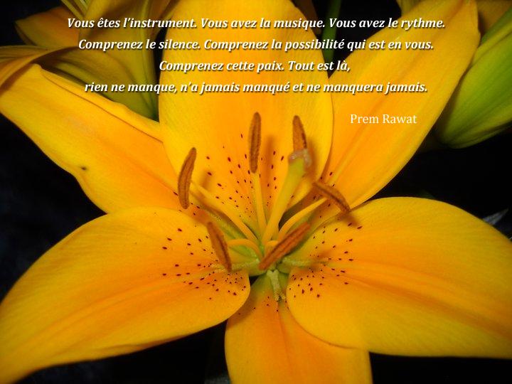 fleur jaune,Prem Rawat,quote