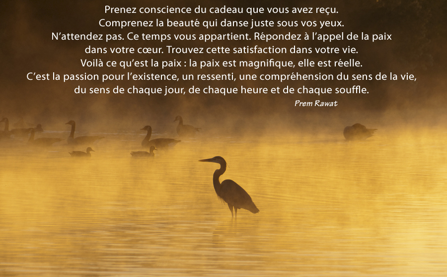 bird, lake, fog,Prem Rawat,quote