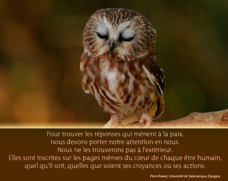 owl,Prem Rawat,quote