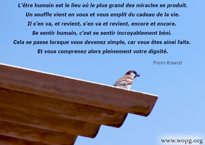 oiseau, toit,Prem Rawat,quote