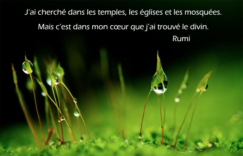 goutte d'eau, herbes,Rumi,quote