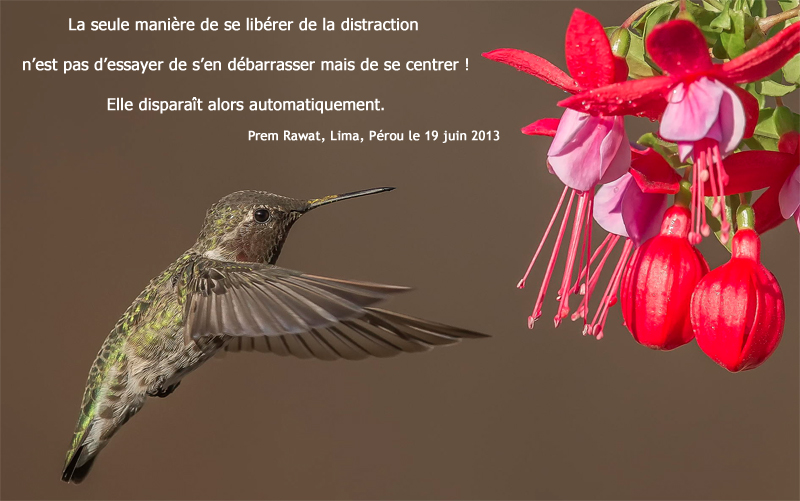 oiseau-mouche, fuschia,Prem Rawat,quote