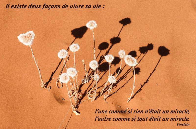 fleurs, désert,Einstein,quote