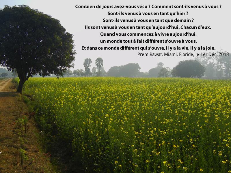 field, flowers,Prem Rawat,quote