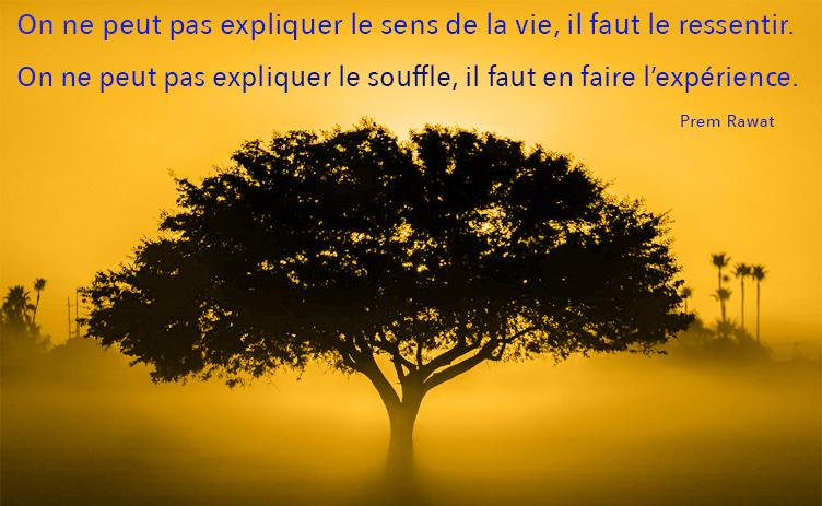 tree, sunset,Prem Rawat,quote
