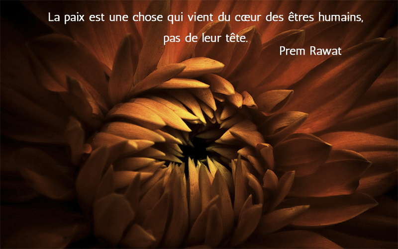 flower,Prem Rawat,quote