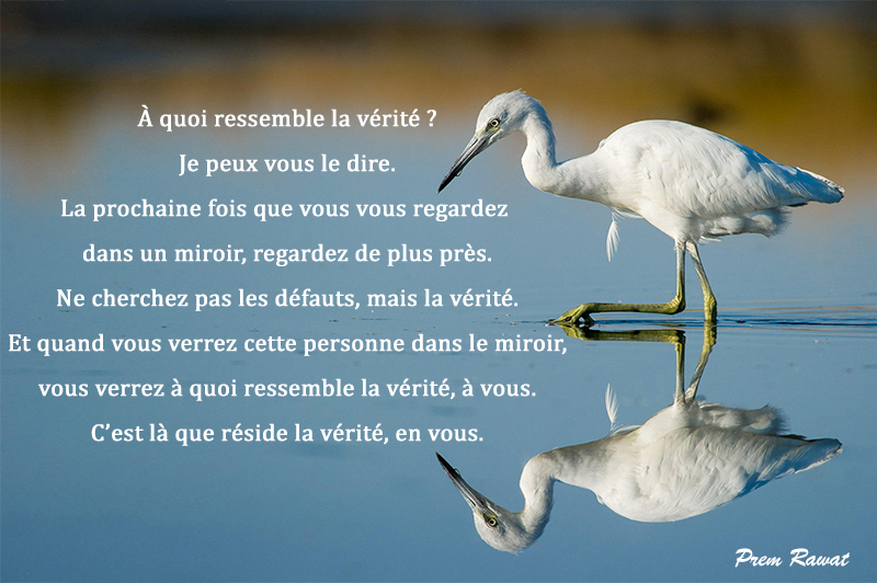 lake, mirror, bird,Prem Rawat,quote