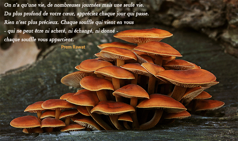 mushrooms,Prem Rawat,quote
