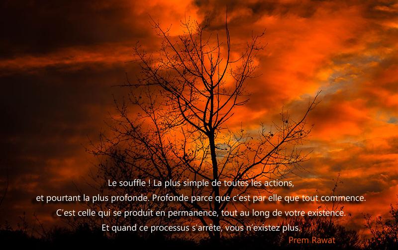 coucher de soleil, arbre,Prem Rawat,quote