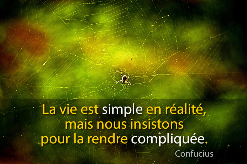spider,Confucius,quote