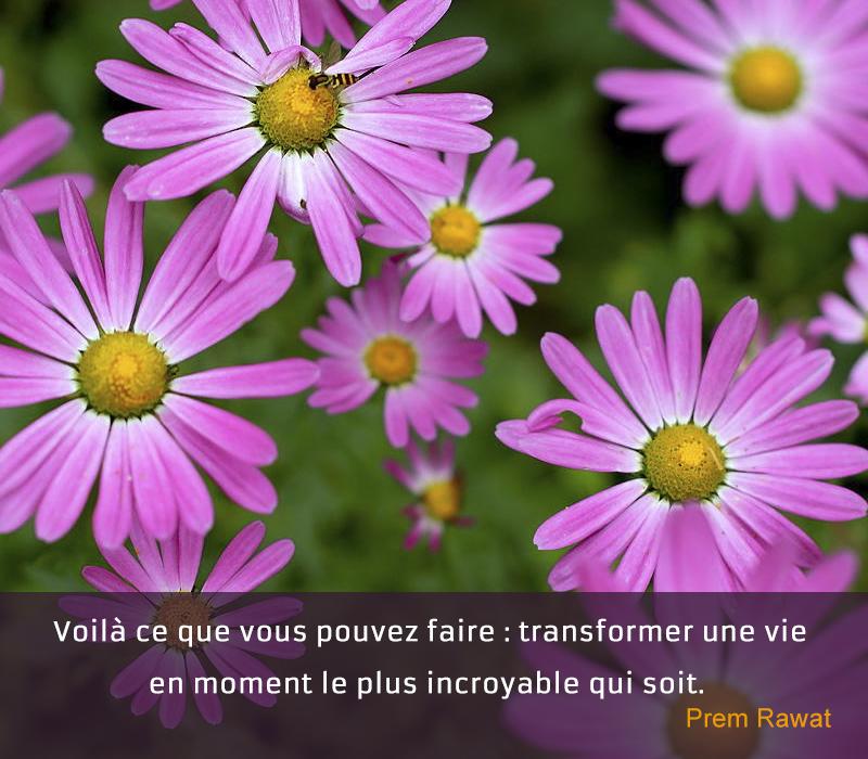 flowers,Prem Rawat,quote