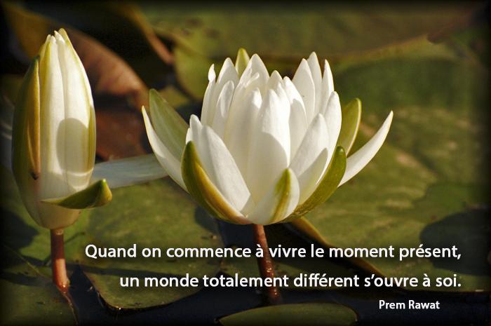 flowers, water lilies,Prem Rawat,quote