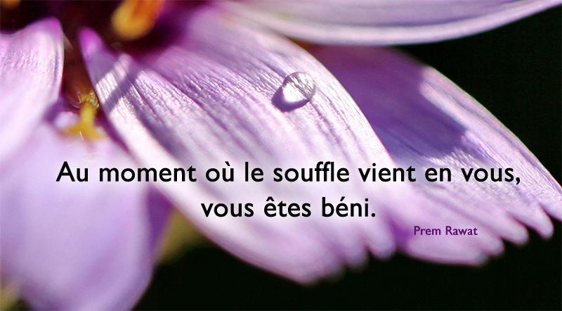 goutte, fleur,Prem Rawat,quote