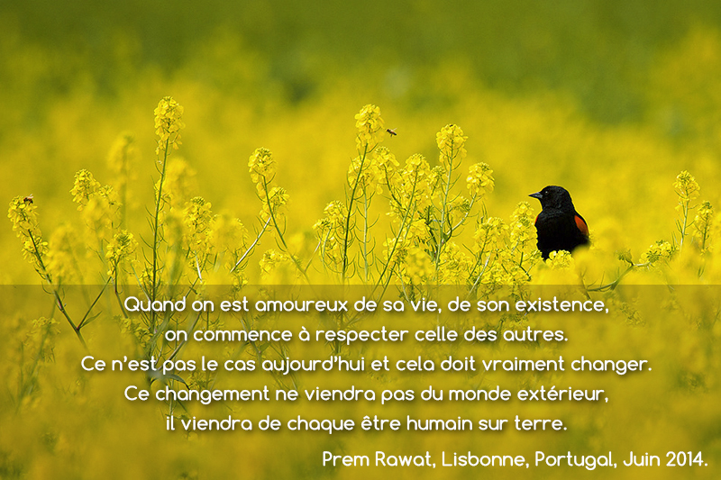 bird, flowers,Prem Rawat,quote