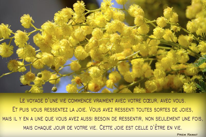 mimosa,Prem Rawat,quote