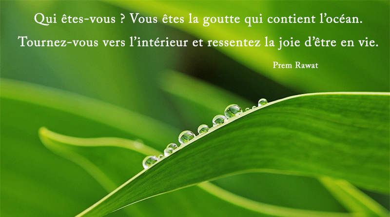 leaves, drops,Prem Rawat,quote