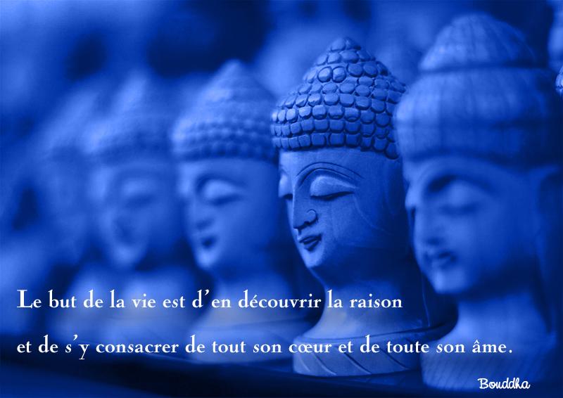 faces,Bouddha,quote