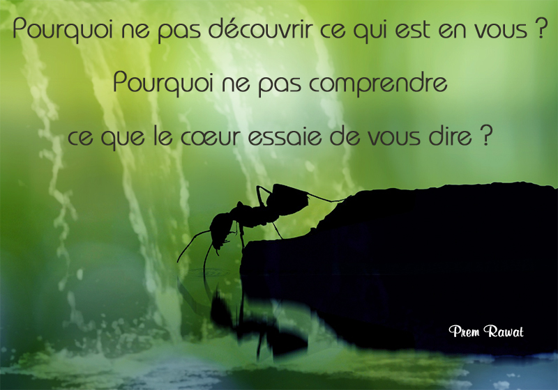 ant,Prem Rawat,quote