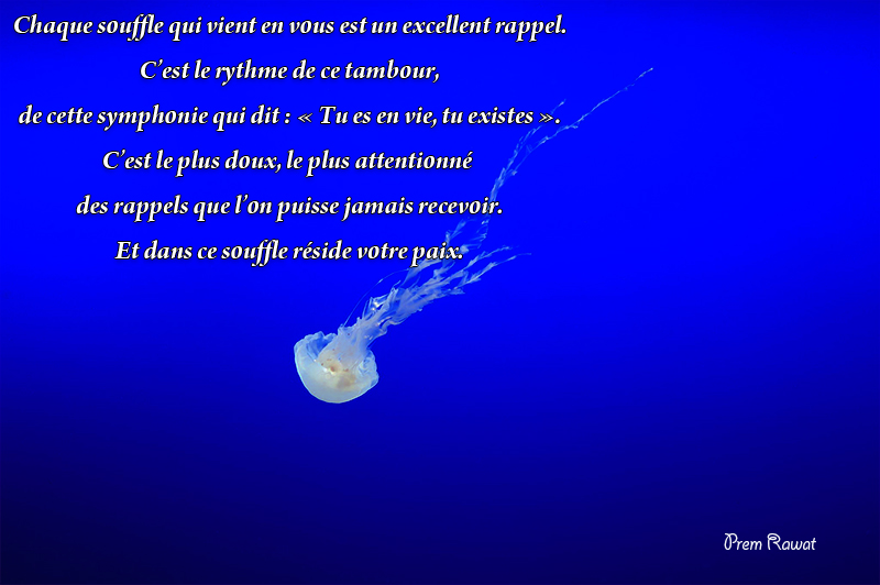 water, jellyfish,Prem Rawat,quote
