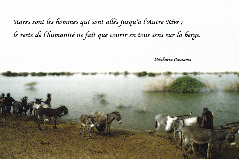 river, donkeys,Siddharta Gautama,quote