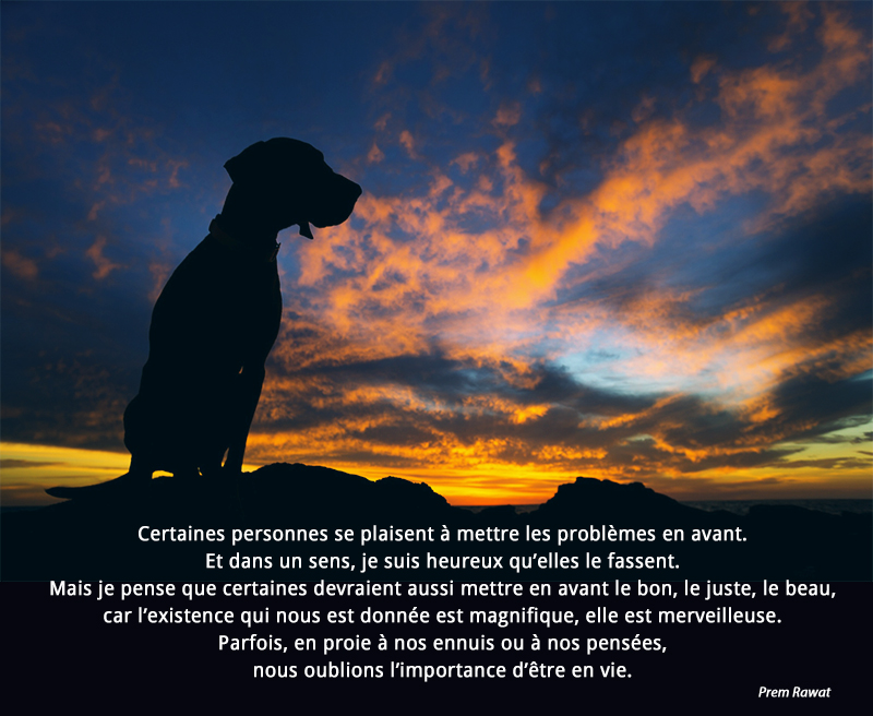 sunset, dog,Prem Rawat,quote