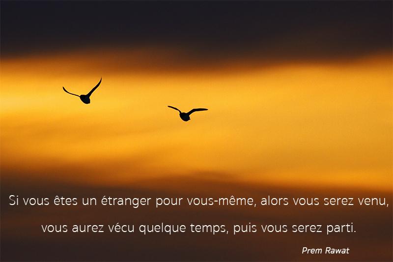 sky, birds,Prem Rawat,quote