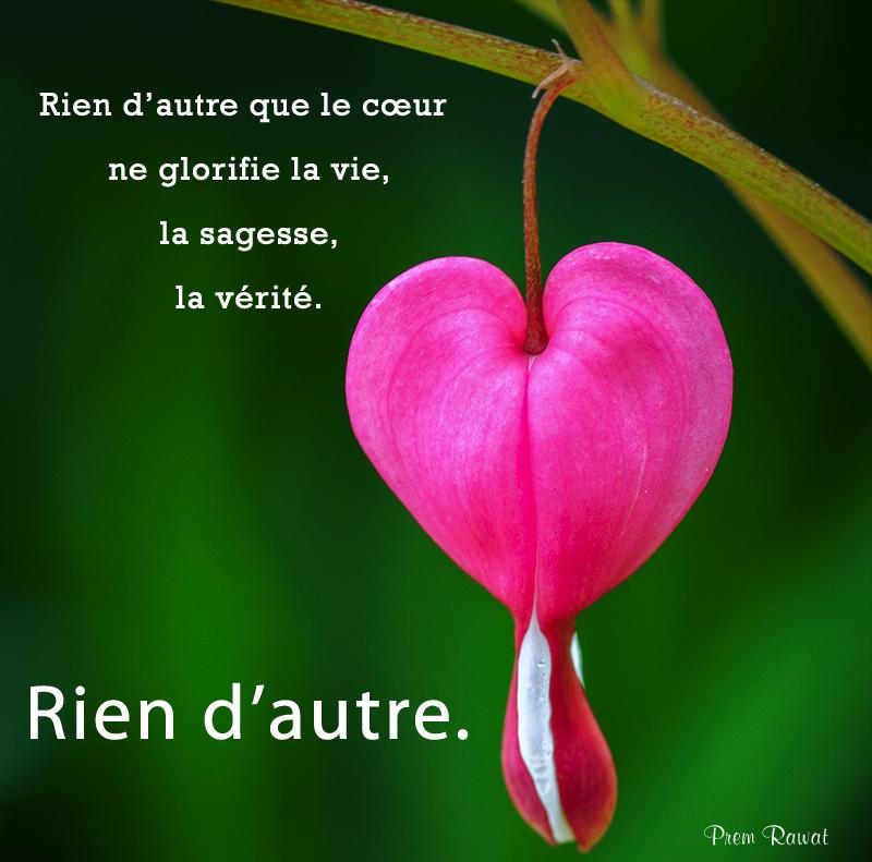 flower, heart,Prem Rawat,quote