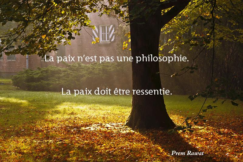 tree, morning light,Prem Rawat,quote