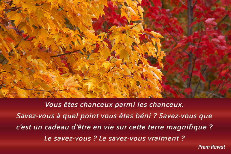 leaves, autumn,Prem Rawat,quote