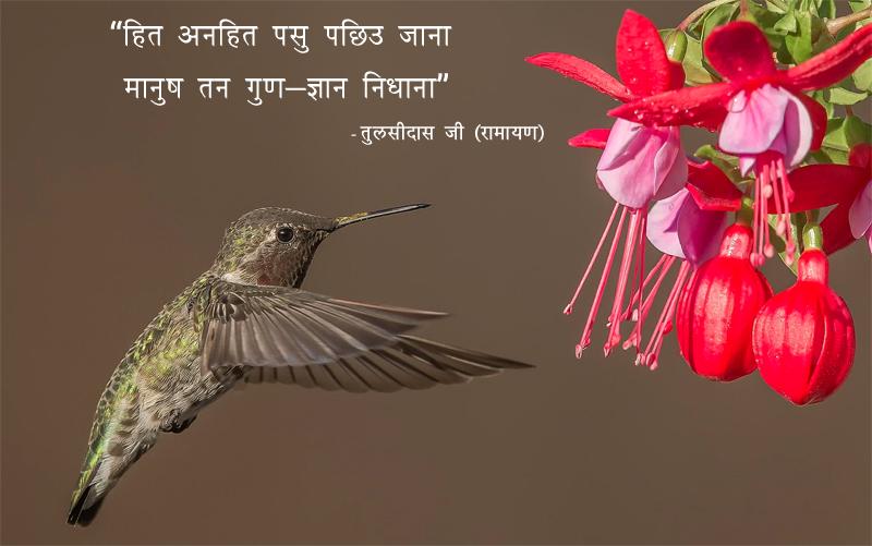 Bird, Flowers, Tulsidas Ji, Ramayan,तुलसीदास जी (रामायण),quote